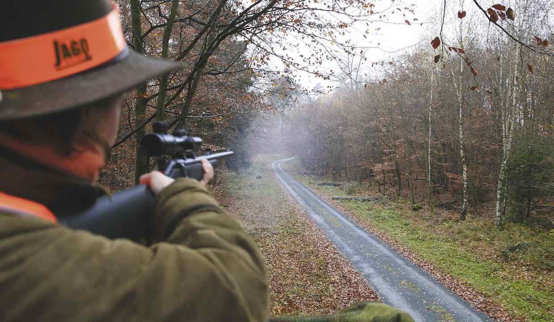 Drückjagd-Schuss Wildschwein